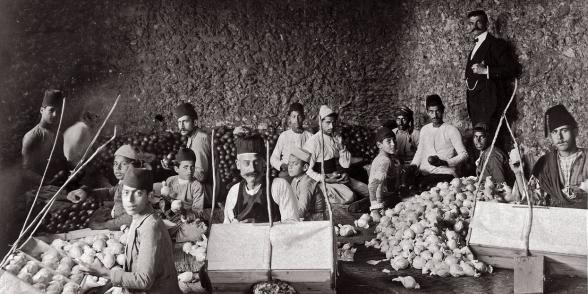 The packaging of oranges in a family workshop in Jaffa, 1907. Bibliothèque nationale de France. https://catalogue.bnf.fr/ark:/12148/cb44587956b.