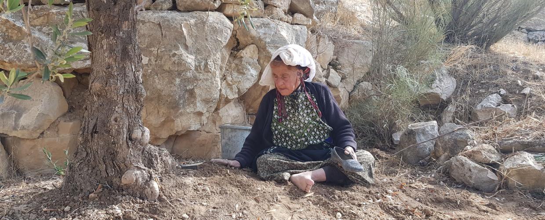 الجدة فاطمة في أرضها