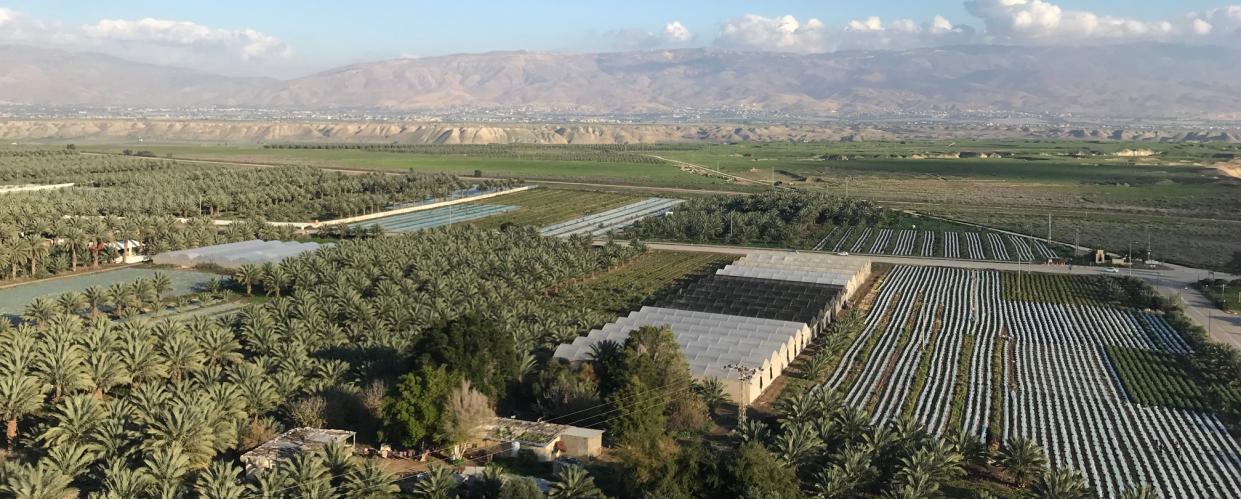 زراعة النخيل والخضار في قريتي مرج الغزال والزبيدات، تصوير أحمد حنيطي